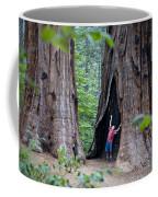 Bill Looking Up At The Sequioas Trees Coffee Mug