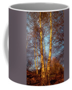 Birch Tree In Golden Hour Coffee Mug