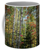 Birches In Fall Forest Coffee Mug