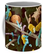 Bird Bath Water Coffee Mug