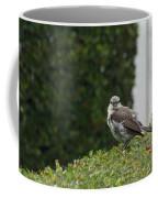 Bird On The Hedges Coffee Mug