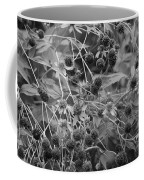 Black And White Sun Flowers  Coffee Mug