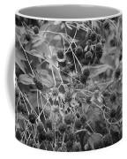 Black And White Sun Flowers  Coffee Mug