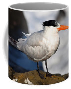 Black Crested Gull Coffee Mug