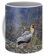 Black-faced Ibis Coffee Mug