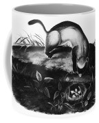 Black-footed Ferret Coffee Mug