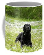 Black Lab Laying In A Field Coffee Mug