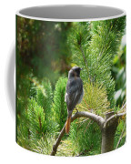 Black Redstart Coffee Mug