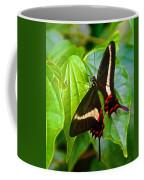 Black Swallowtail Butterfly In Iguazu Falls National Park-brazil  Coffee Mug