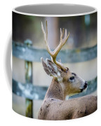 Black-tailed Buck Coffee Mug