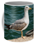 Black Tailed Gull On Dock Coffee Mug