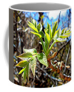 Black Walnut Spring Coffee Mug
