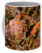 Blacktip Grouper Epinephelus Fasciatus Coffee Mug