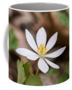 Bloodroot Wildflower Coffee Mug