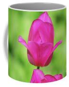 Blooming Dark Pink Tulip Flower Blossom In A Garden Coffee Mug