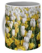 Blooming Tulips As Far As The Eye Can See Coffee Mug