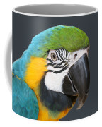 Blue And Gold Macaw Digital Freehand Painting Coffee Mug