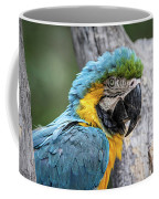 Blue And Yellow Macaw Coffee Mug