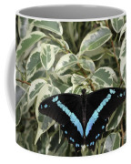 Blue-banded Swallowtail Butterfly Coffee Mug