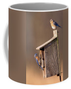 Blue Bird Couple Coffee Mug