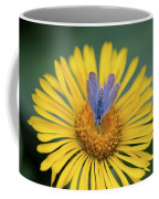 Blue Butterfly On Alpine Sunflower Coffee Mug