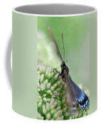 Blue Butterfly On Sedum Coffee Mug