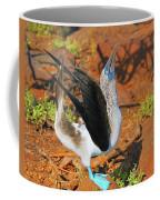 Blue-footed Boobie Display Coffee Mug