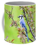 Blue Jay Coffee Mug