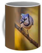 Blue Jay In Golden Light Coffee Mug