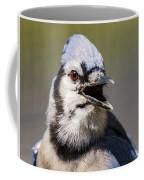 Blue Jay Portrait Coffee Mug
