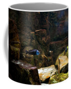 Blue Little Fish In Aquarium Coffee Mug