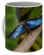 Blue Morpho Butterfly Coffee Mug by Sandy Keeton