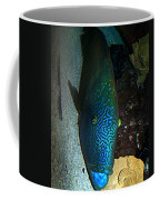 Blue Parrot Fish Coffee Mug