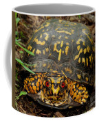 Blue Ridge Box Turtle Coffee Mug