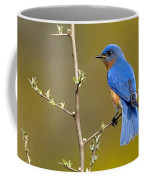 Bluebird Bliss Coffee Mug