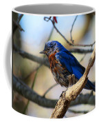 Bluebird In May Coffee Mug