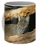 Bobcat Hiding In A Log Coffee Mug