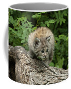 Bobcat Kitten Exploration Coffee Mug by Sandra Bronstein