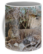 Bobcat Resting Coffee Mug