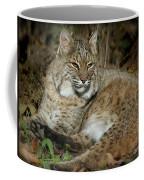 Bobcat Warming In The Autumn Sun Coffee Mug