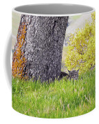 Bobcat Watch Coffee Mug