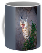 Bobcat Yawn Coffee Mug