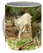 Bobcats Begin To Hunt Coffee Mug