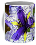 Boothbay Beauty Coffee Mug