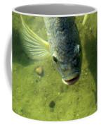 Botox Coffee Mug