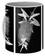 Bottlebrush Trio Coffee Mug