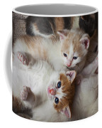 Box Full Of Kittens Coffee Mug
