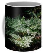 Bracken Fern Afternoon  Coffee Mug