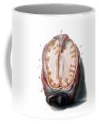 Brain, Anatomical Illustration, 1802 Coffee Mug