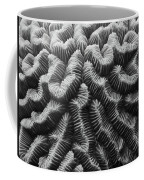 Brain Coral Details Coffee Mug